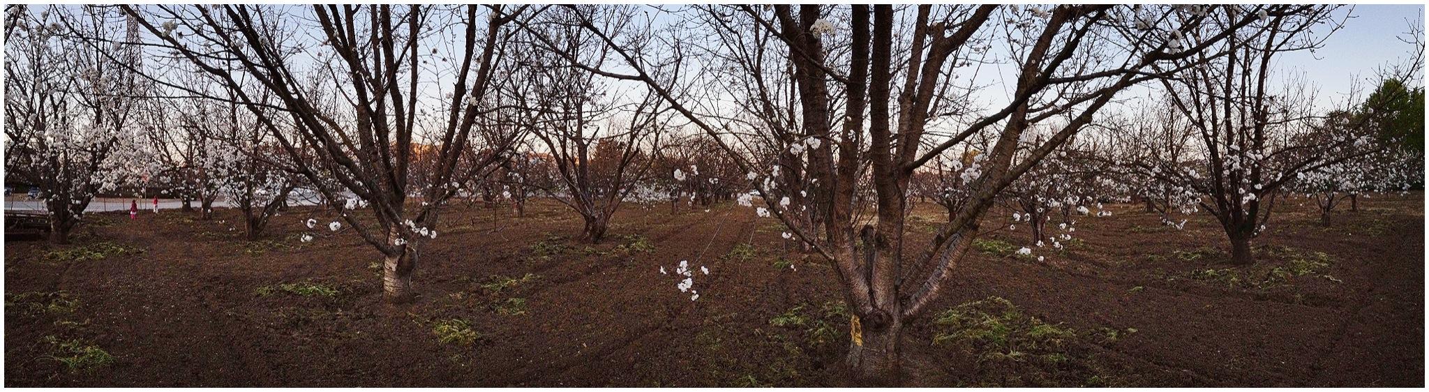 panoramic_iphone_photos_1
