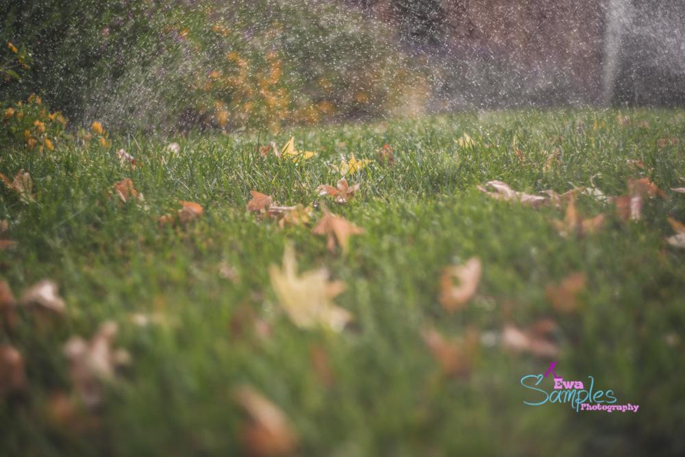 Sprinklers again...