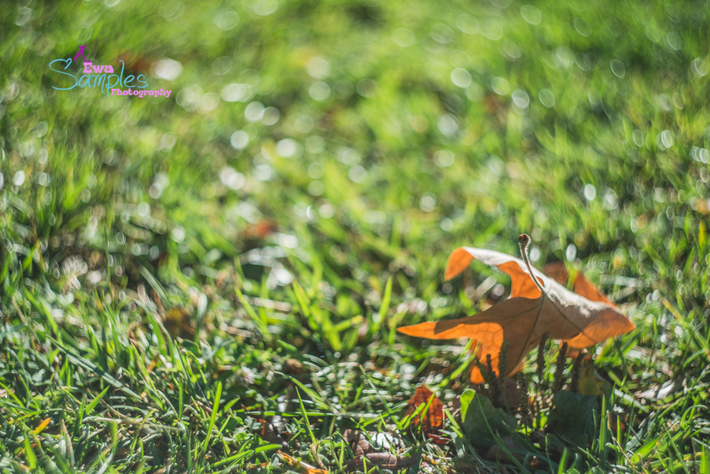 fall_family_pictures_ewa_samples_photography-7