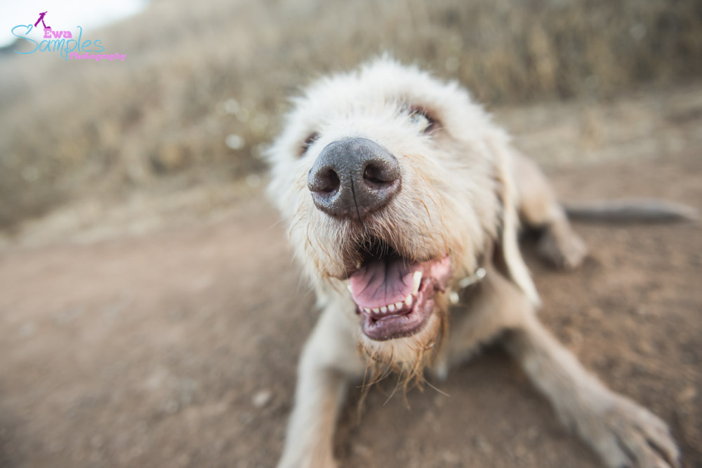 dogs_portraits_ewa_samples_photography_san_jose-11
