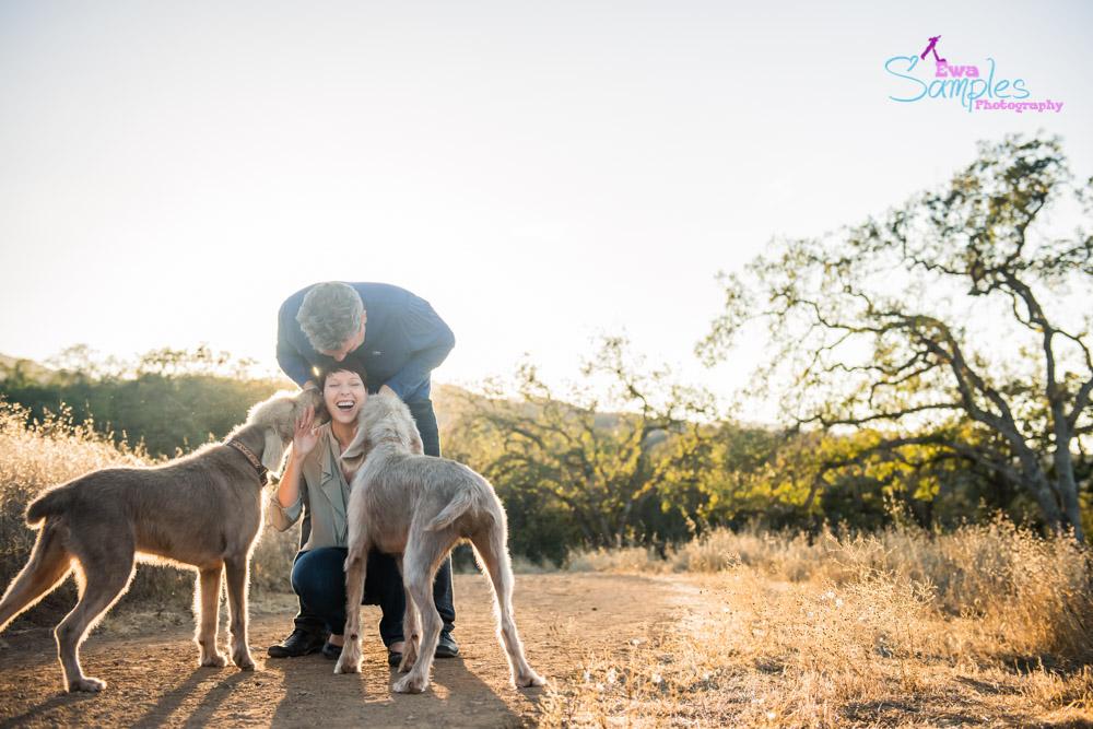 dogs_portraits_ewa_samples_photography_san_jose-7