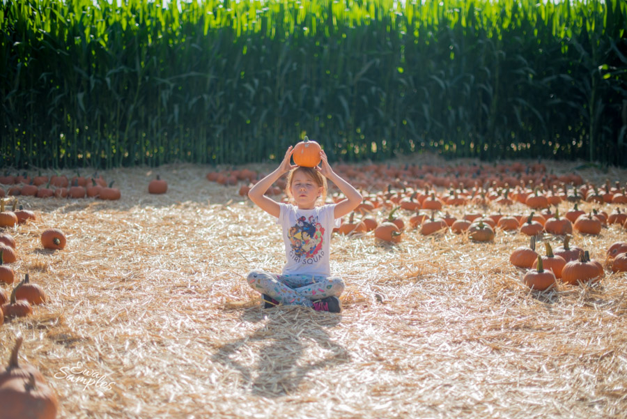 fun trip to Uesugi Farms Pumpkin Park