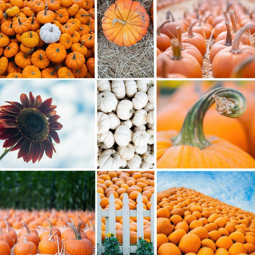 Pumpkin Stock Images _ Ewa Samples Photography